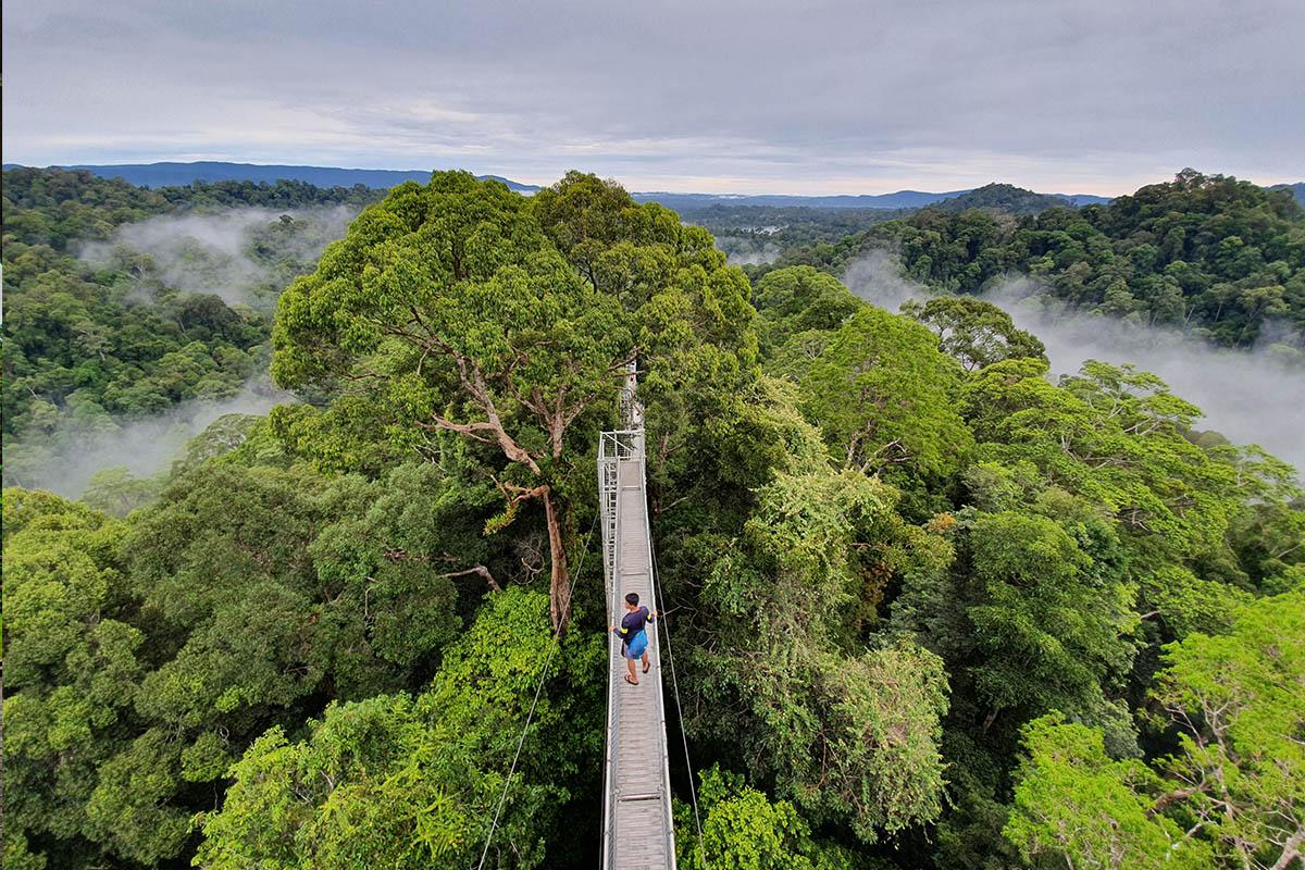 Temburong Canopy Walk